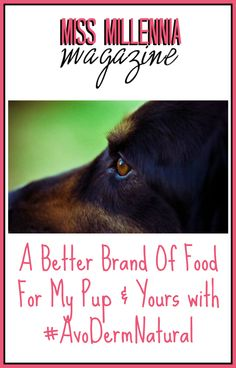 A Better Brand Of Food For My Pup & Yours with #AvoDermNatural