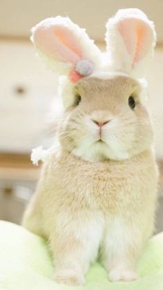 If you are searching for a furry friend which is not just cute, but very easy to have, then look no further than a family pet rabbit. Cute Baby Bunnies, Funny Bunnies, Cute Baby Animals, Funny Animals, Fluffy Bunny, Rabbit Toys, Bunny Rabbit, Cute Animal Pictures, Cute Creatures