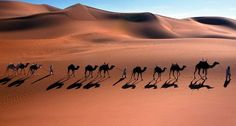 CamelCaravan_EN-AU1725133123.jpg (958×512)
