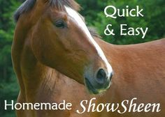 This homemade Show Sheen recipe is an easy DIY option made with ingredients that you probably already have at home. It's a quick way to get your horse show ring ready, without the cost of store bought sprays.