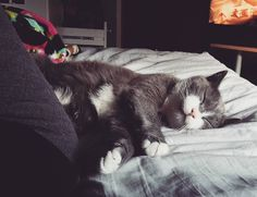 Mood . . . #kallethecat #cats #instacat #catsofinstagram #brbsleepingfor84years