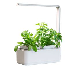 Easy-peasy micro hydroponic gardening is now at your fingertips thank to this ingenious Smart Indoor Micro Garden. Grow Light Bulbs, Grow Lights For Plants, Led Grow Lights, Hydroponic Herb Garden, Hydroponic Gardening, Indoor Flowering Plants, Indoor Flowers, Culture D'herbes, Micro Herbs