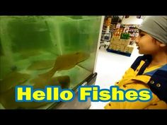 Hello Fishes