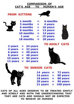 CAT AGE CHART #cutecat - About cat at Catsincare.com!