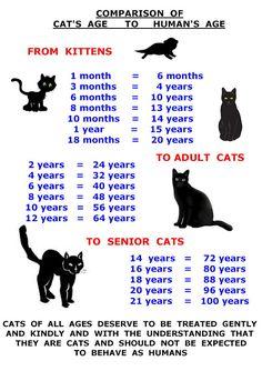 CAT AGE CHART #cutecat - About cat at Catsincare.com!                                                                                                                                                      More