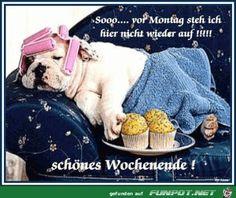 Die 185 Besten Bilder Von Schönes Wochenende Lustig Humor Humour