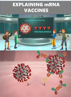 This animated science video tells the story of the COVID-19 messenger RNA (mRNA) vaccines. It is the story of the first vaccines created using genetic engineering. It is the story of gene code hacking to get our bodies' cells to produce the protein spikes on the coronavirus surface. The protein spikes will create an immune response without causing the COVID-19 infection. The immune antibodies and other parts of the immune system will remain as protection from an attack by the complete virus. Science Education, Teaching Science, Science Videos, Stories For Kids, Our Body, Storytelling, Coding, Animation, Spikes