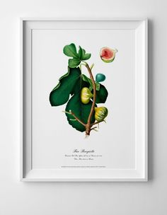 Botanical art poster of figs vintage antique picture home kitchen wall art print Wall Art Decor, Wall Art Prints, Antique Pictures, Kitchen Wall Art, Figs, Geometric Art, Botanical Art, Vintage Home Decor, Picture Wall