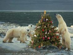 North Pole Christmas