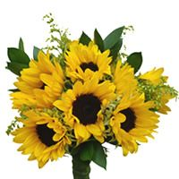 Sunflowers Mini/Petite. Free Shipping!