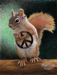 Penny Lane ☮️ It is not often that you see a wholesome little photo of a cute little squirrel with a peace sign. For Ashlie Terry FOREVER 21 Hippie Peace, Happy Hippie, Hippie Love, Hippie Style, Hippie Things, Hippie Chick, Hippie Vibes, Animals And Pets, Baby Animals