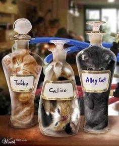 chaton-bouteille - Recherche Google