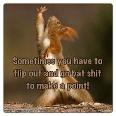 Hey, I like this red squirrel flipping out and going bat shit because I'm doing exactly the same thing! I Love To Laugh, Make Me Smile, Flip Out, Its Friday Quotes, Lol So True, Hilarious, Funny, Oui, Quotable Quotes