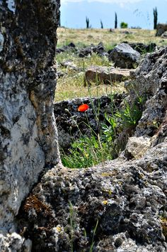 A single flower in the necropolis of Hierapolis in Turkey.