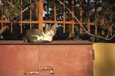 Sizilien - Katze in Mongerbino (bei Palermo) http://sizilienverstehen.wordpress.com/