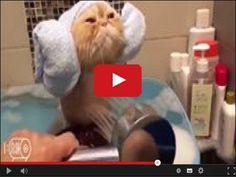Śmieszne zwierzaki w serwisie www.smiesznefilmy.net tylko tutaj…