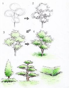 Drawing Art Various Drawings - Landscape Architecture Drawing, Landscape Sketch, Landscape Drawings, Plant Sketches, Tree Sketches, Nature Sketch, Nature Drawing, Realistic Drawings, Art Drawings