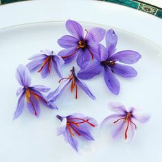 Saffron – The World's Most Expensive Spice – But the Bulbs are Cheap.