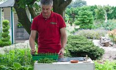 Buchsbaum durch Stecklinge zu vermehren ist einfach und kostengünstig