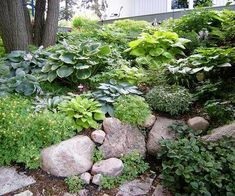 Design Lessons from a Minnesota Shade Garden Hostas are a topnotch groundcover for shady areas. Plant them on a tough-to-mow hillside to create a lovely, carefree garden bed. If you have a steep slope that water runs down so quickly the soil can't absorb Hillside Garden, Backyard Garden Landscape, Sloped Garden, Small Backyard Gardens, Garden Beds, Garden Pool, Garden Oasis, Gardens On A Slope, Herb Garden