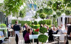 'Garden of Soul' at Soul Bar, Auckland. Garden created by Xanthe White Design, featuring Pittosporum 'Jade' instant hedges as a subtle backdrop and partition.