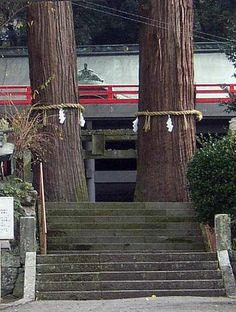 The Hachiman Shrine in the Asami district in the south of Beppu City is the tutelary shrine of the town, and was founded in the 12th Century.  The entrance is flanked by two ancient cedars and the local tradition says that if a couple walk together between the trees they will be married.