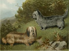 "Matted Antique Dog Print ""Skye Terrier"" C. 1881 from Cassell's Illustrated Book of the Dog 12x14"""