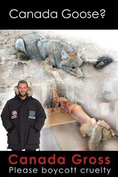 Canada Goose? More like Canada Gross. Stop killing coyotes and boycott cruelty  #canada goose