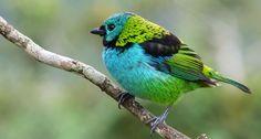 76 árvores brasileiras que atraem aves
