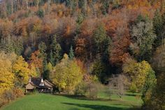 Mucha gente, al leer las palabras wild y rewilding se i … House In Nature, Media Images, Romantic Getaway, Autumn Home, Free Stock Photos, Free Photos, Remote, Environment, Country Roads