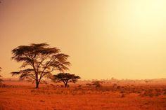 фотообои африканская саванна,старое дерево, закат солнца, природа, пейзаж