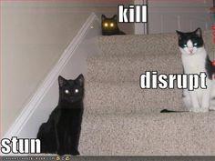 Kill... Disrupt... Stun....
