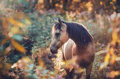 www.pegasebuzz.com   Equestrian photography : Carina Maiwald.