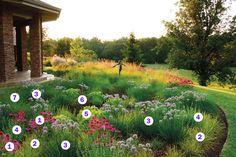 Matrix Planting:  1. Echinacea purpurea 'Kim's Knee High' 2. Sesleria autumnalis…