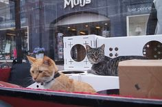 Thomas Vles made the 300-mile journey with his two cats, Mushi and Cheesy, who didn't seem...