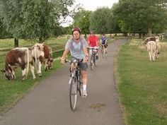 I don't know why but bikes and cows in Cambridge seem to go together!