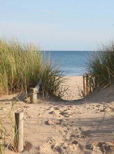 395 Beach Sawgrass Backdrop