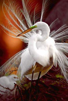Egret - #Birds