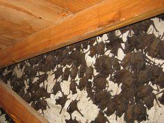 If only I had bats in my attic. bye bye bugs!