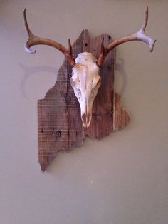 European mount, white tail deer on a pallet wood base
