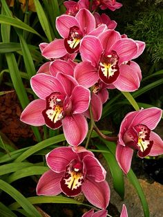 Orchid 017