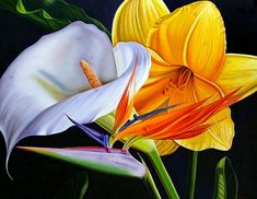 Inspired by the Renaissance paintings of the old Italian masters in the books of art, Venezuela-born artist Ellery Gutierrez started painting when he was Hyper Realistic Paintings, Renaissance Paintings, Traditional Paintings, Tropical Flowers, Calla Lily, Amazing Flowers, Watercolor Flowers, Flower Art, Art Flowers