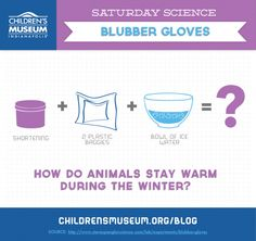 Saturday Science: Blubber Gloves | The Children's Museum of Indianapolis
