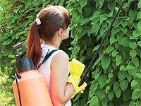 Domácí postřiky proti škůdcům: česnekový olej, výluh z kopřiv a tabáku, křemelina