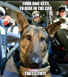 German Shepherd Military War K9 Hero & Cutie!