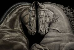 The real one with his copy... by Peter Lippmann (for France Galop)