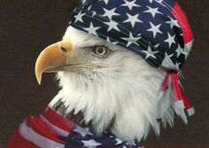 It doesn't get more free than a bal eagle wearing an American Bandana. American Pride, American Flag, Image American, American Poetry, American Symbols, American Spirit, Eagle Pictures, Eagle Images, Random Pictures