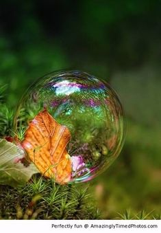 Bubble formation over a leaf   Amazingly Timed Photos
