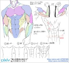 pixivision on male torso anatomy Muscle Anatomy, Body Anatomy, Anatomy Art, Anatomy Drawing, Human Anatomy, Anatomy Images, Human Drawing, Body Drawing, Drawing Poses