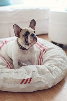 Vintage Grain Sack Dog Beds--oooh & i'll take the frenchie, too. (: chaco needs a little buddy!